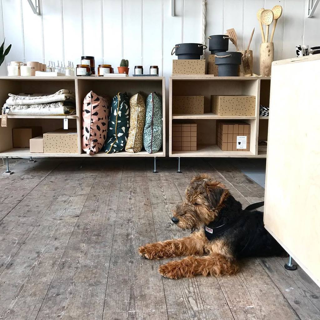 Brown and black dog in an independent shop surrounded by homewares