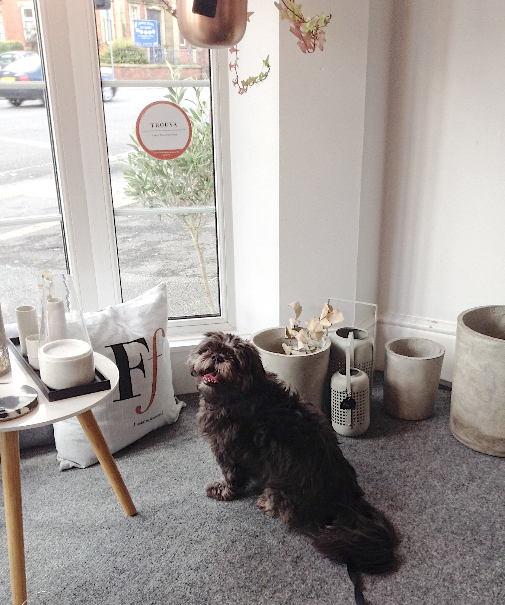 Ozzy the dog in an independent shop