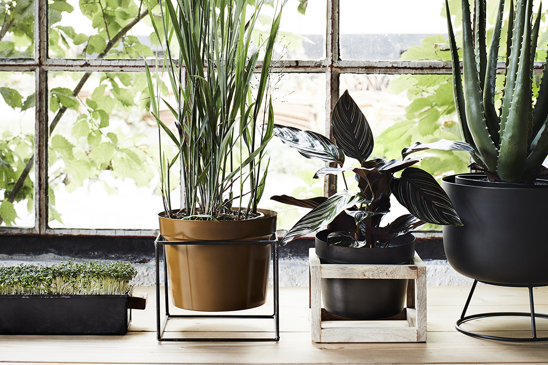 Bring the outside in with plants and flowers